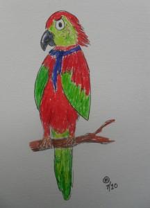 Harry the grumpy parrot