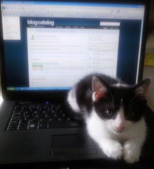 Alfonso the kitten